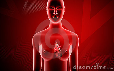 Royalty Free Stock Images Human Body Heart Image12075289