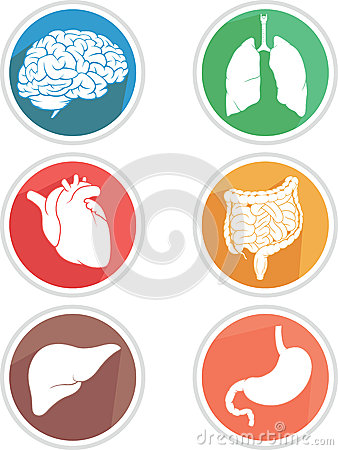 Free Human Body Organs Icon Stock Photos - 46468533