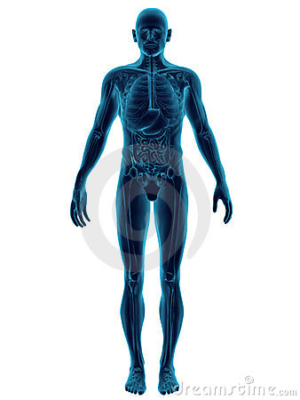 Human Body Transparent
