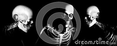 Human Bones 105