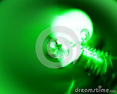 Human Bones 5