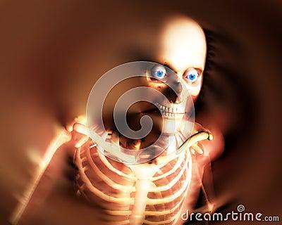 Human Bones 8