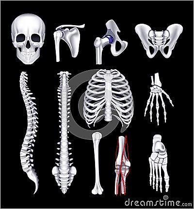 Human bones, on black