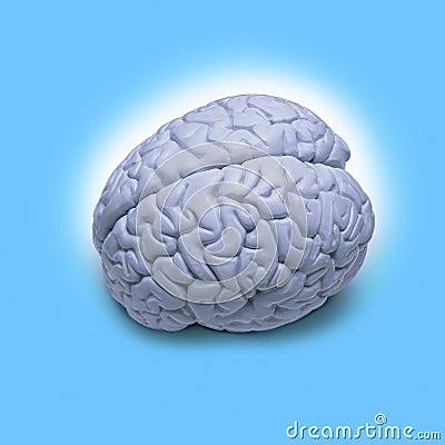 Free Human Brain Stock Photography - 7305492