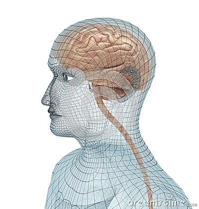 Human brain and body