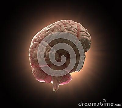 Human brain concept illustration
