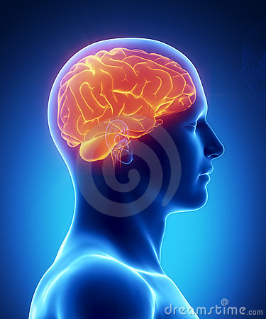 Human Brain Glowing Lateral View Royalty Free Stock Photos - Image: 20873098