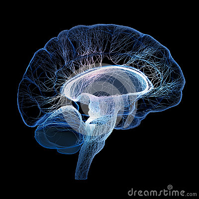 Free Human Brain Illustrated With Interconnected Small Nerves Royalty Free Stock Images - 33834319