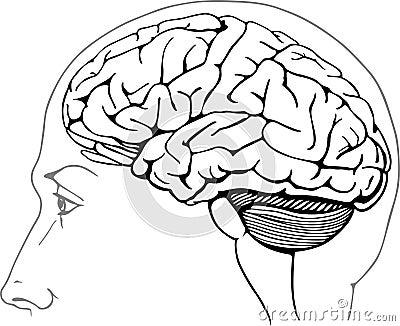 Brain Diagram No Labels E Picfo