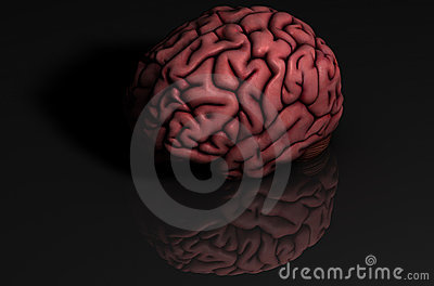 Human brain with reflection