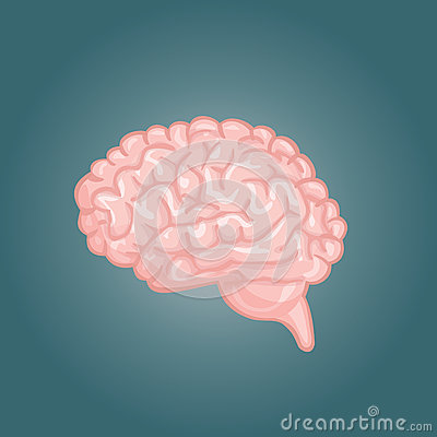 human brain drawing front view