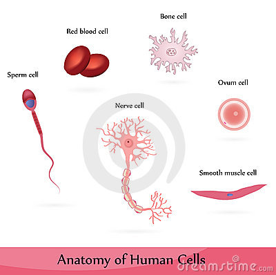 Free Human Cells Royalty Free Stock Photos - 18770478