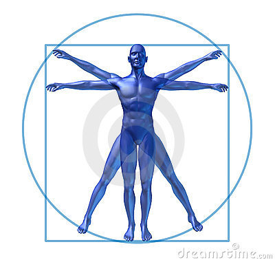 Human diagram vitruvian man isolated
