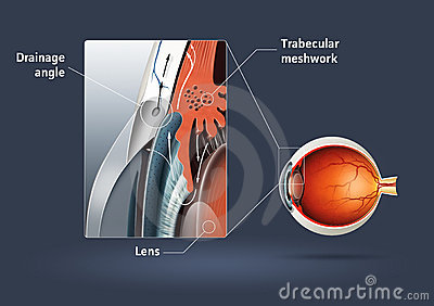 Human eye - glaucoma