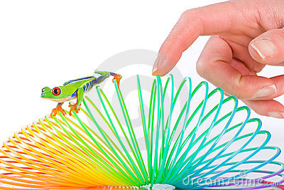 Human hand following a red eyed tree frog on toy