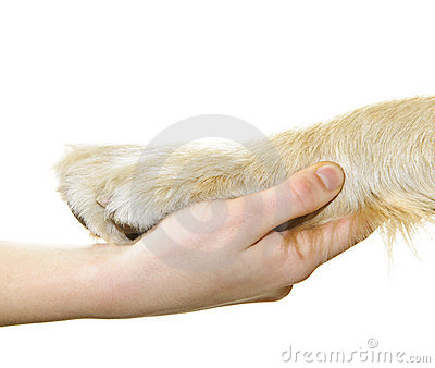 Human hand holding dog paw