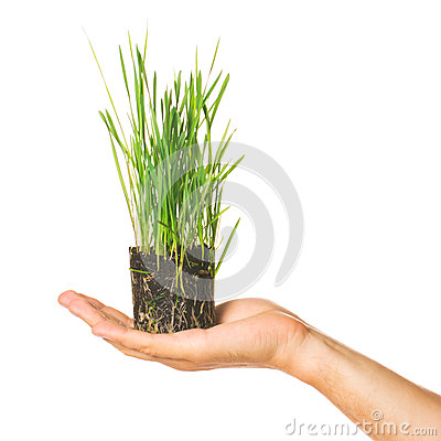 Human hand holding green grass