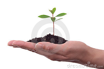 Human hand with plant