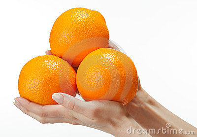 Human hands holding appetizing oranges