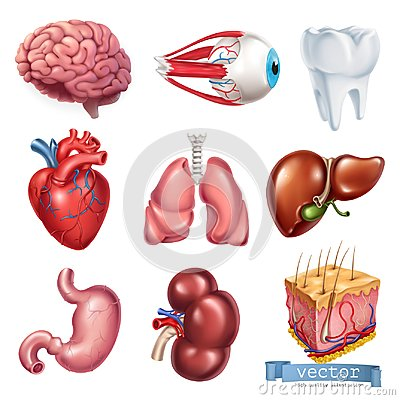 Human heart, brain, eye, tooth, lungs, liver, stomach, kidney, skin. 3d vector icon set Vector Illustration