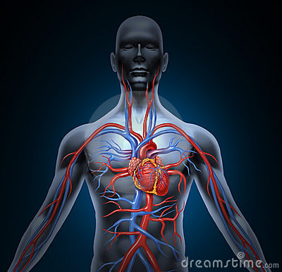 Human Heart Circulation Royalty Free Stock Photos Image