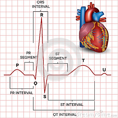 Free Human Heart Normal Sinus Rhythm And Heart Anatomy Royalty Free Stock Photography - 37494417