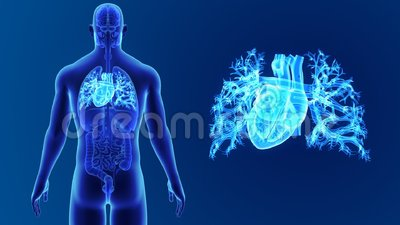 Human Heart zoom with Organs Stock Photo