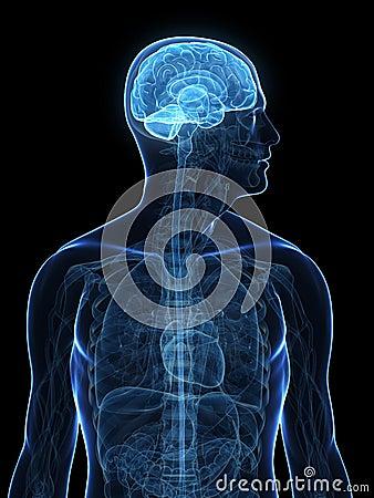 Human highlighted brain