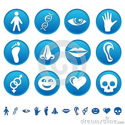Free Human Icons Stock Photography - 10558532