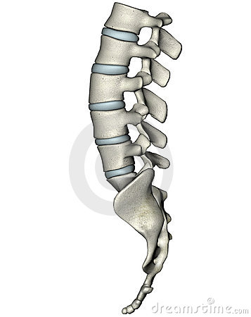 Free Human Lateral Lumbosacral Spine Royalty Free Stock Photos - 3873458