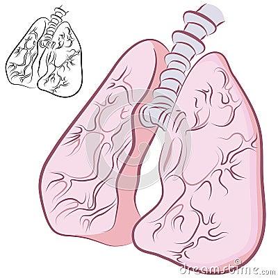 Human Lung Set