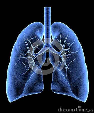 Free Human Lungs Royalty Free Stock Image - 35319416