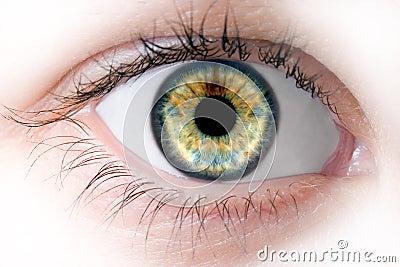 Human macro beauty  eye