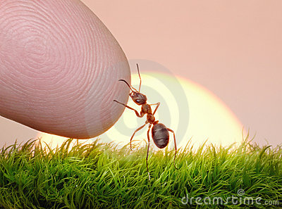 Human, Nature And Ant - Finger Of Friendship Stock Images - Image: 17037434