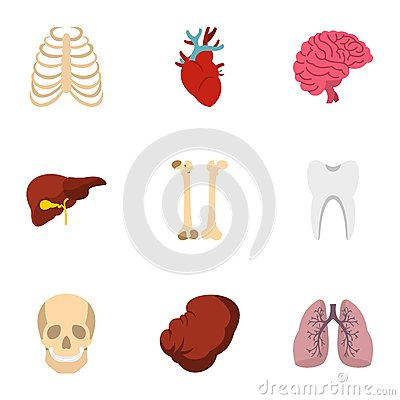 Human organs anatomy icons set, flat style Vector Illustration