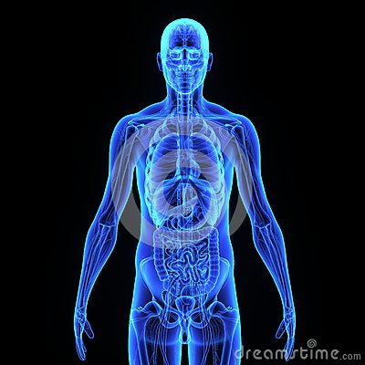 Human Digestive System Drawing additionally Human mouth likewise Search besides Internal Organ Body Parts additionally Stock Illustration Human Organs Two More Working Together Execution Specific Body Function Form Organ System Image47649296. on stock illustration respiratory system human medical internal organs