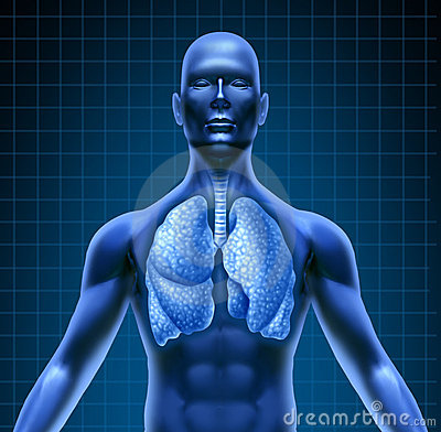 Human repiratory system