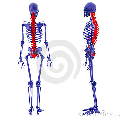 Human Skeleton over White Bad Back