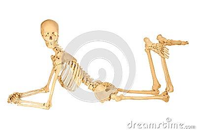 Human Skeleton Posing