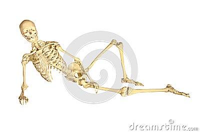 Human skeleton reclining