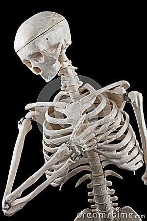 Free Human Skeleton Toy Royalty Free Stock Image - 46526476