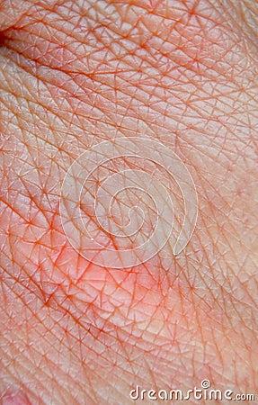 human skin macro stock photo image 50834585 human skin macro stock photo image 50834585