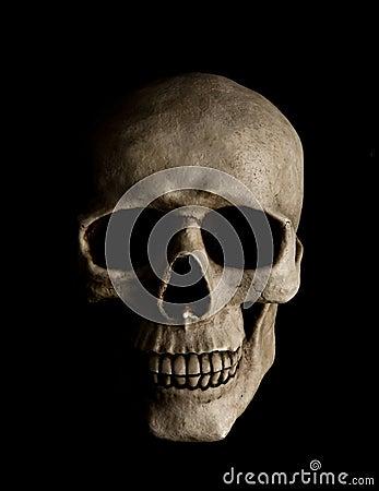 Free Human Skull Stock Image - 18662991