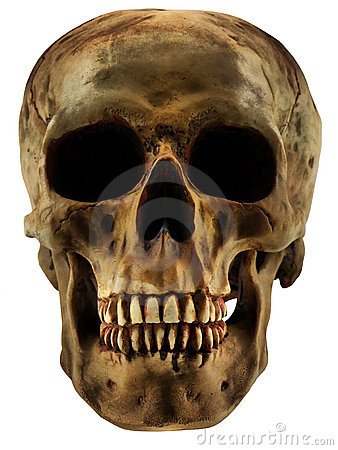 Free Human Skull Royalty Free Stock Photography - 3322837