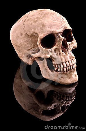 Free Human Skull Royalty Free Stock Photo - 5537325