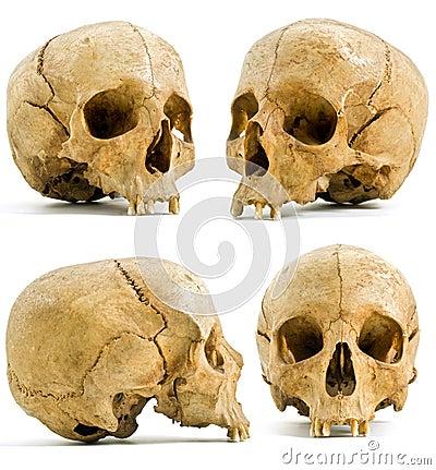 Free Human Skull Royalty Free Stock Images - 6021309