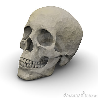 Free Human Skull Royalty Free Stock Photo - 8323465