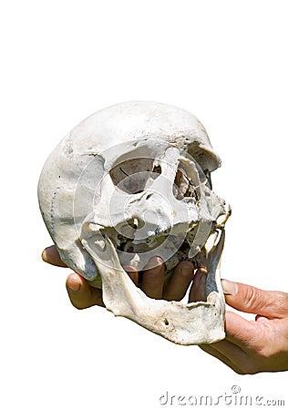 Human skull on hand 8