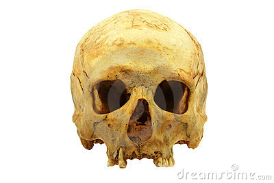 Human skull isolated