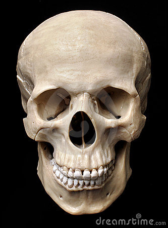Free Human Skull Model Stock Photography - 18867222